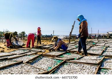 """PHAN RANG, VIETNAM - FEB 25,2016: People working at Steamed fish """" ca com """" Factory at My Tan village, Phan Rang, Vietnam"""
