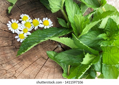 pharmaceutical chamomile flowers and mint on a tree cut