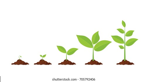 Phases plant growing. Planting tree infographic. Evolution concept. Sprout, plant, tree growing agriculture icons. illustration in flat style Raster version