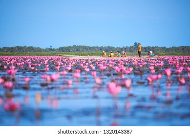 Phatthalung, Thailand-February 11, 2019: Tourists on long tail boat in the field of pink lotus at Tale Noi, Phatthalung province, Thailand