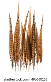 pheasant feathers on a white background