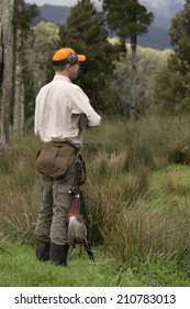 Pheasant hunter waits for the dogs to flush out a bird on the West Coast of New Zealand