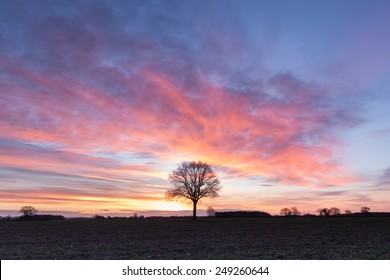 The Pheonix Tree, Pre-Dawn light on the Vale of York in the UK