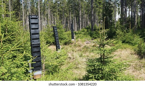 Pheromonal trap, bark beetle protection in the forest