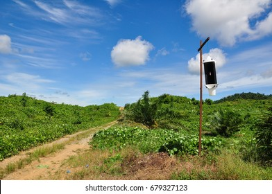 Pheromone trap installed at the oil palm field as a biological control of Rhinoceros Beetle especially in unmatured oil palm replanting area