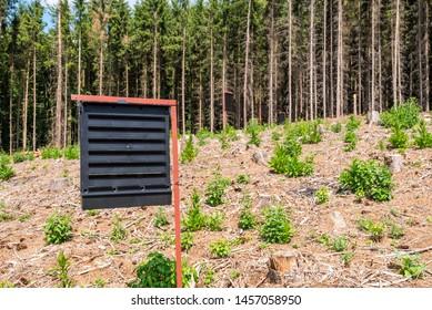 Pheromone traps for European spruce bark beetle