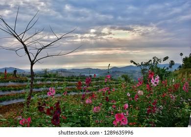 Phetchabun, Thailand - January 06, 2019: Beautiful landscape at Khaokho in Phetchabun, Thailand.