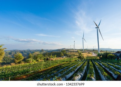 Phetchabun, THAILAND, Wind turbine power generators against a blue sky with clouds in a green Paddy field, Located Khao Kho Phetchabun Province