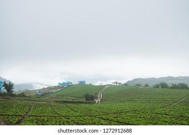 Phetchabun, Thailand-July 28,2018, Highland Agriculture at Phu Tub Berk, Phetchabun, Thailand.