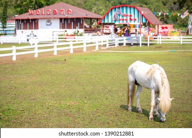 Phetchaburi Province, Thailand - February 11, 2018 : White horse at The Swiss Sheep Farm the biggest sheep farm And fun park style in Huahin Cha-Am.