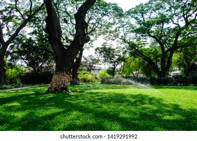 Phetchaburi, Thailand - May 18, 2019.A big tree that is hundreds of years old Shady in Marukhathaiyawan Palace, Cha-Am. Marukhathaiyawan Palace is another name Love and Hope Palace.