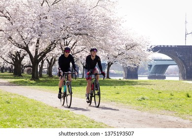 Philadelphia, PA/USA - April 9, 2019: Two cyclists ride by cherry blossoms in peak bloom on an early spring morning along the banks of the Schuylkill River.