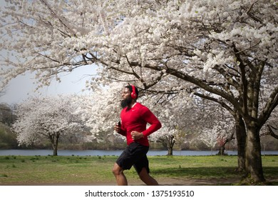 Philadelphia, PA/USA - April 9, 2019: An African American man jogs past cherry blossoms in peak bloom on an early spring morning along the banks of the Schuylkill River.