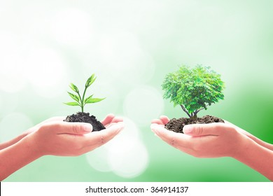 Philanthropy concept: Two human hand holding small and big plant on blurred green nature background