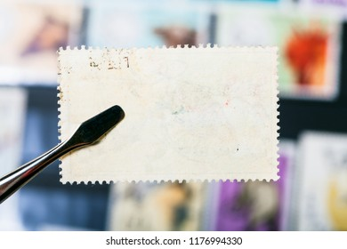 philately concept - tongs holds postage stamp with unused glue back side over stamp-album