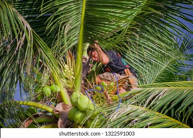 PHILIPPINES, BORACAY ISLAND, WHITE BEACH - January 01 2019: Plippino climber on the coconat palm with machette cutting fresh buko nuts to sell it to the tourists.