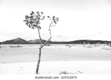 in the philippines island beautiful cosatline tree hill and boat for tourist