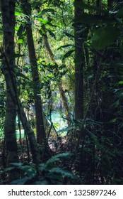 Philippines, Mindoro, Apo Reef Natural Park, mangrove on Apo Island