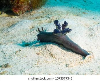 Philippines. Nembrotha milleri (Milleri's nembrotha) on bright corrals, underwater macro