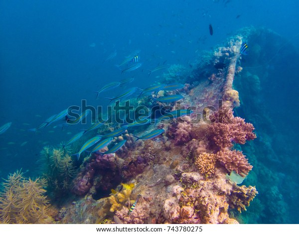 Philippines Palawan Coron Island Scuba Diving Stock Photo