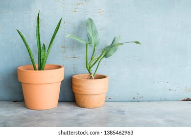 Philodendron and snake plant on concrete floor