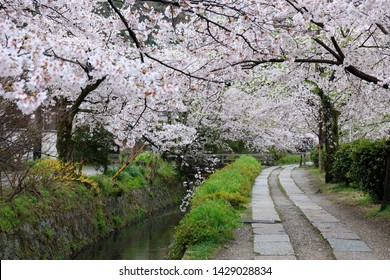 The Philosopher's Path (Tetsugaku-no-michi) Is a Pedestrian Path That Follows a Canal Which Is Lined by Hundreds of Cherry Trees in Kyoto, Japan.