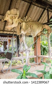 PHITSANULOK, THAILAND - February 8: Elephant skeleton in Service points for tourists at Thung Salaeng Luang National Park, Phitsanulok, Thailand