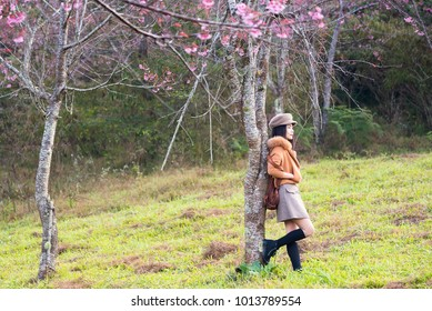 Phitsanulok, Thailand - January, 21, 2018 : Unidentified name Happy woman traveler and poses portraiture photography in garden of Sakura Trees or Cherry blossom at Phu lom lo, Phitsanulok, Thailand