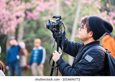 Phitsanulok, Thailand - January, 21, 2018 : Unidentified name Visitors are watching and take photos the flowers in garden of Sakura Trees or Cherry blossom at Phu lom lo, Loei, Thailand