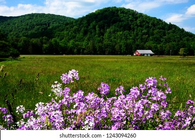 Phlox and Barn, Webster County, West Virginia, USA
