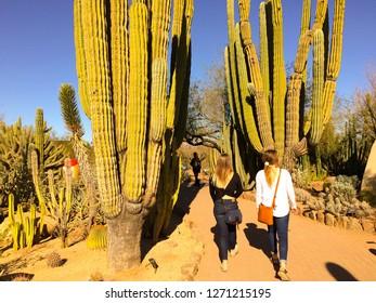 Phoenix, Arizona / USA - January 23, 2018: Two young women walk along a trail next to some giant Cardon Cactus, Yucca Cactus, Barrel Cactus and Digger Cholla Cactus at the Desert Botanical Garden