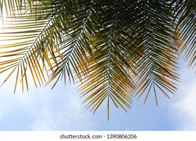 phonic palm leaves seen below. blue sky background,