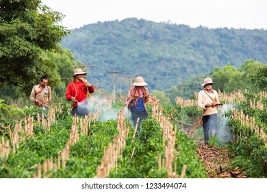 Phop Phra, Tak, Thailand - November 10, 2018 : Unidentified Myanmar migrants workers are spraying chemical in the Chilla farm at Phop Phra, Tak, Thailand.