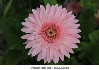 Phot of a pink flower