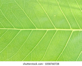 A photo of abstract green leaf texture for background, close up