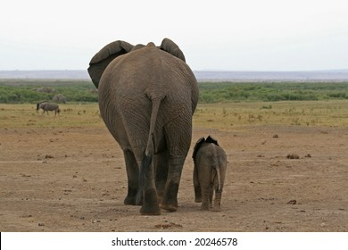 A photo of an African elephant in the wild