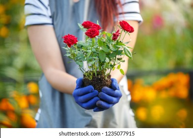 Photo of agronomist woman holding roses in garden