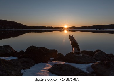 photo of an alaskan husky sitting by a lake at sunset