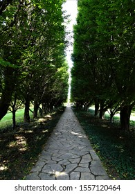 A photo of a architecturally tree lined path with stone walkway.  Path is lined with periwinkle.  The trees are European Hop-hornbeam.  The photo was taken in Niagara Falls Ontario Canada.