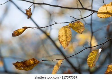 A photo of autumn leaves