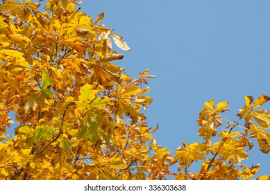 Photo of autumn leaves with blue sky as background