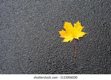 Photo of autumn leaves on asphalt road