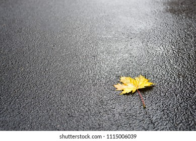 Photo of autumn leaves on asphalt road
