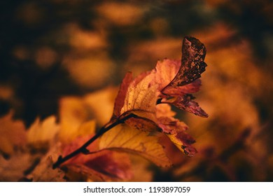 Photo of autumn leaves on a tree. Stylized as analog gained photo. Golden autumn. Bright red, yellow, orange background.