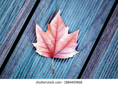 Photo background with autumn retro maple leaf on a tree. Example of an autumn background for the season