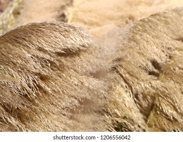 Photo background of bright dried plants of fluffy sunlit