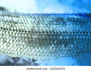Photo background bright macro beautiful fish in ice