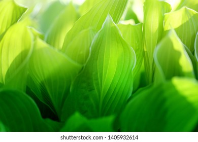 Photo background macro green leaves decorative in the park