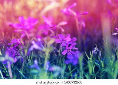 Photo background of spring lilac flowers in the park