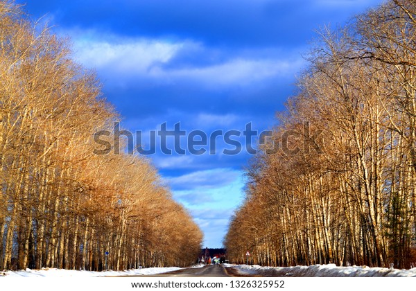 Photo background unusual bright landscape with trees and road and clouds